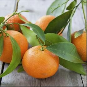 Mandarino Etna